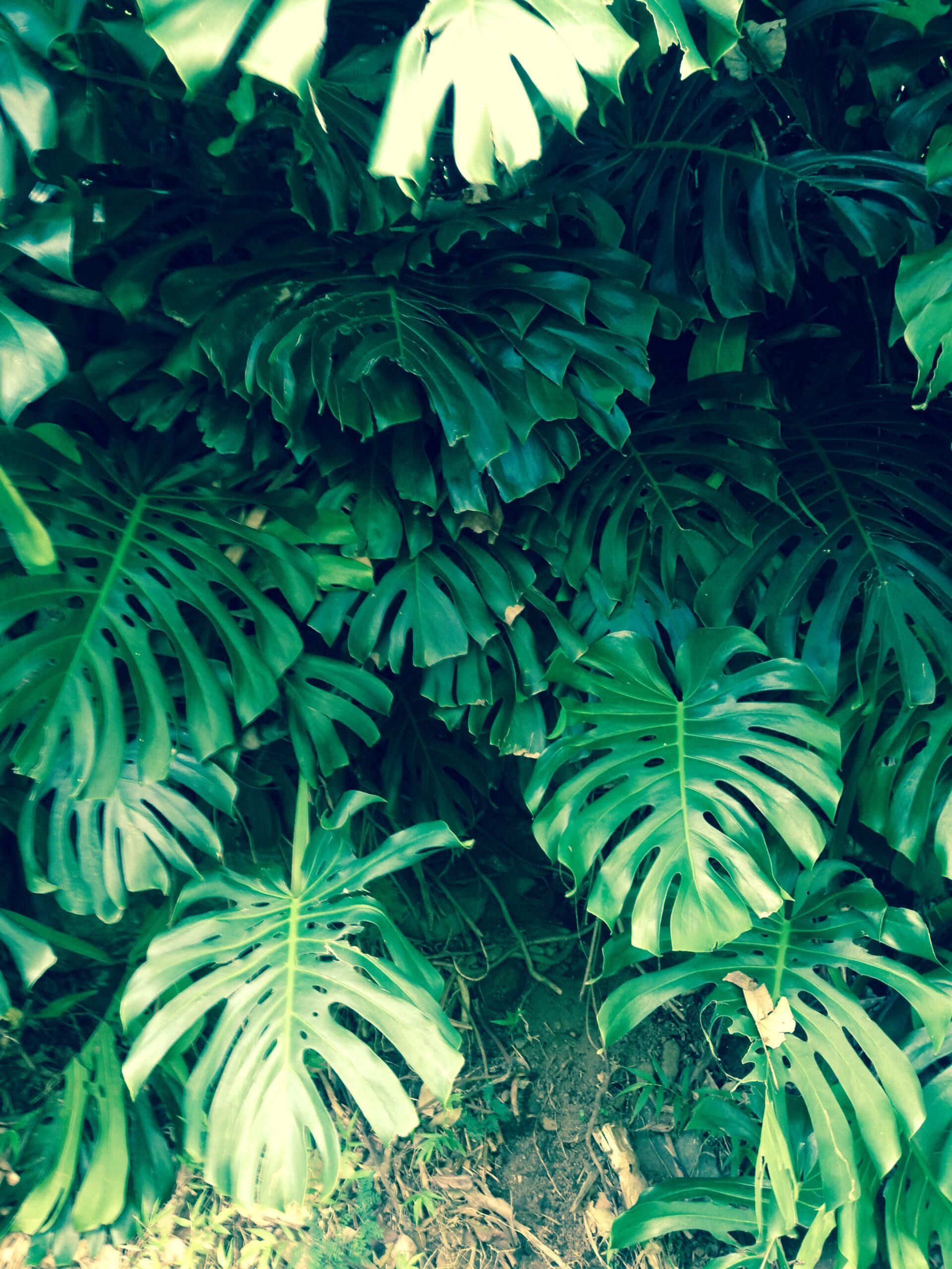 ハワイのジャングルで暮らす、という憧れの女性。