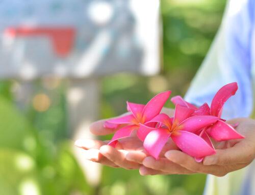プルメリアの5枚の花びらに込められている、ハワイの心。